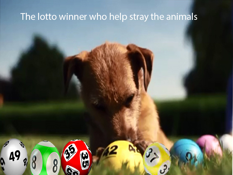 The lotto winner who help stray the animals